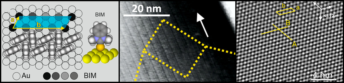 Self-assembled monolayer formed by BIM molecules on the Au(111) surface